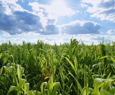 Fundo Newton financia pesquisas que envolvem uso de nitrogênio na agricultura