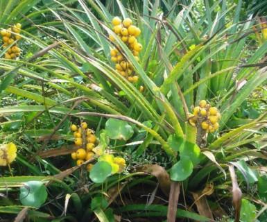 Lei da Biodiversidade é sancionada com 'vetos pontuais'