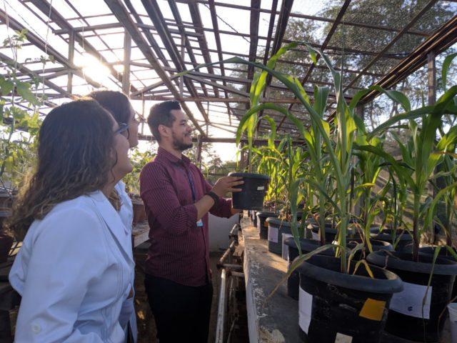 Resultado de imagem para Pesquisa de cientista baiano pode ajudar plantas a sobreviverem na seca